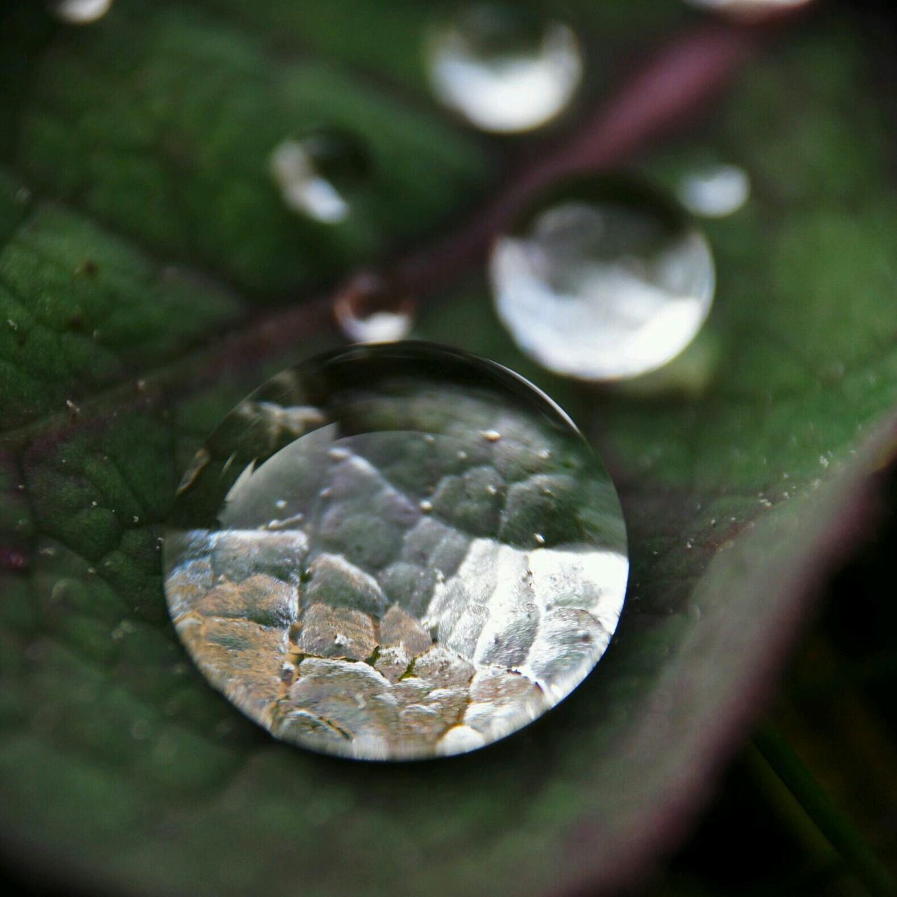 Macro shot of leaf on water droplets