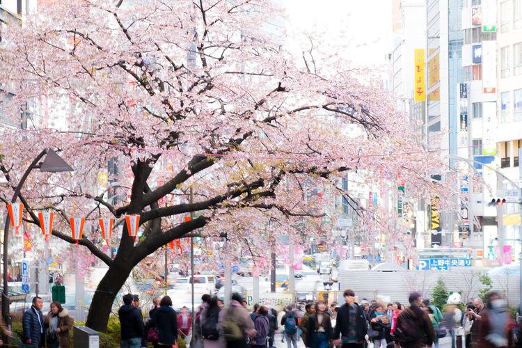 A Sakura (cherry blossom) tree in Ueno Park, Tokyo, Japan. Beauty In Nature Beauty In Nature Bird Blossom Cherry Day Flower Fragility Nature Outdoors Park Plum Plum Blossom S Sakura Sky Spring Sunny Sunny Day Tokyo Ueno