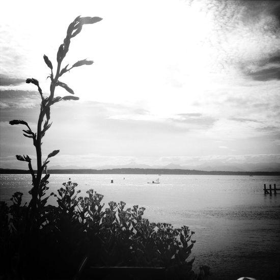 IPSEmpty Pugetsound On The Water