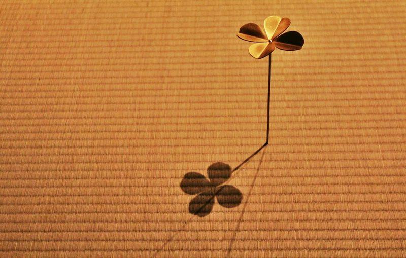 ビエンナーレも終わったよ…。 Art Japan 芸術祭 クローバー