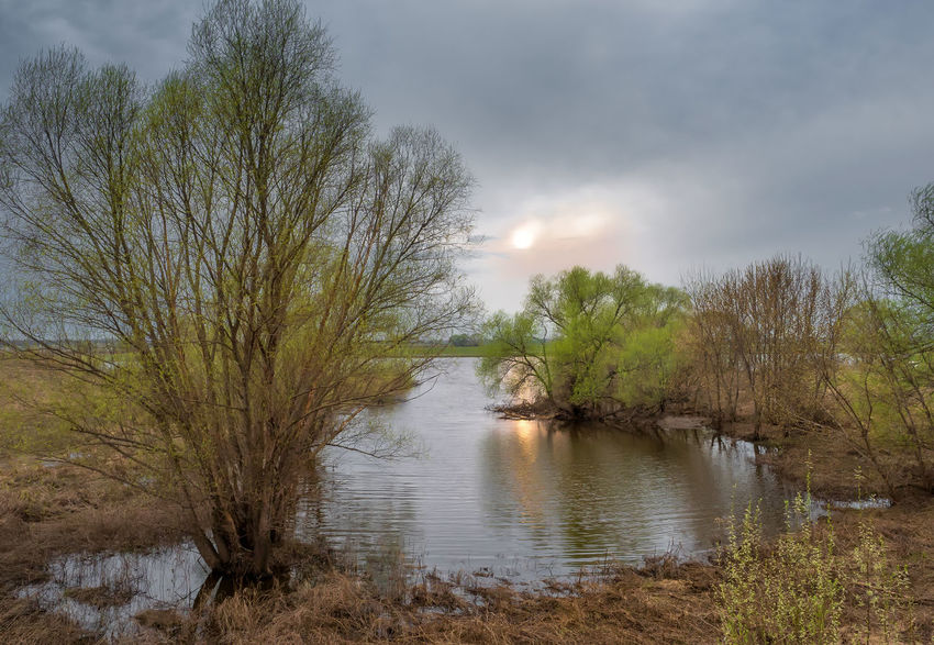 Russia, tourism, Oka River, spill, spring Russia Beach Beauty In Nature Cloud - Sky Day Growth Lake Land Nature No People Non-urban Scene Oka River Outdoors Plant Scenics - Nature Sky Spill Spring Tourism Tranquil Scene Tranquility Tree Water