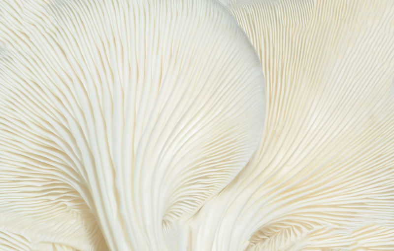 Backgrounds Close-up No People Full Frame White Color Pattern Softness Abstract Textured  Extreme Close-up Nature Beauty In Nature Indoors  Feather  Science Growth Animal Themes Simplicity Plant Animal Lightweight Textured Effect Marine