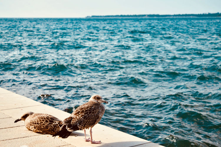Seagulls Animal Animal Themes Animal Wildlife Animals In The Wild Beach Beauty In Nature Bird Day Focus On Foreground Horizon Over Water Nature No People One Animal Outdoors Perching Sea Seagull Sunlight Vertebrate Water