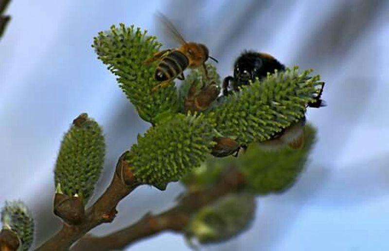 Naturephotography 🐝 Natur Pur Bienen Bei Der Arbeit Hummeln