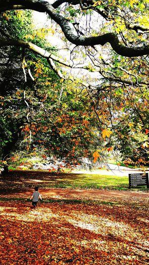Crunching the leaves Leaves Autumn Fall Big Tree Gardens Fun Family Children Kids Aunty