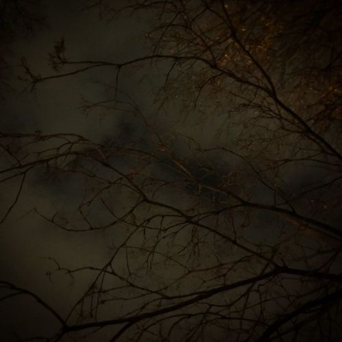 Bare Tree Night Nature Tranquility Branch Beauty In Nature No People Outdoors Moon Scenics Tree Sky