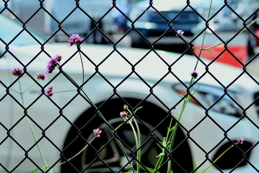 Chainlink Fence Protection Safety Security Day Outdoors Nature No People Sky Flower Close-up Mercedes-Benz Mercedes AMG