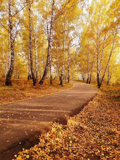 Autumn Tranquil