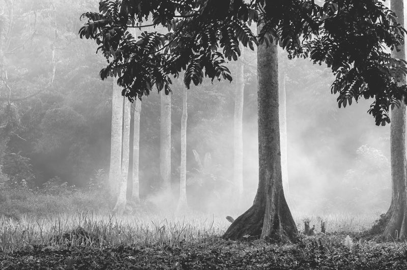 A forest and fog