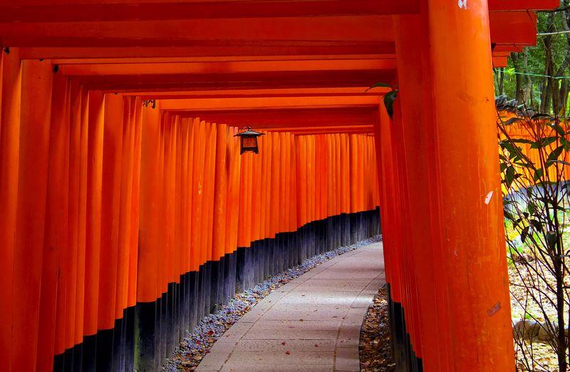 京都 伏見稲荷 Japan Temple Landscape Shinto Shrine Japanese Temple