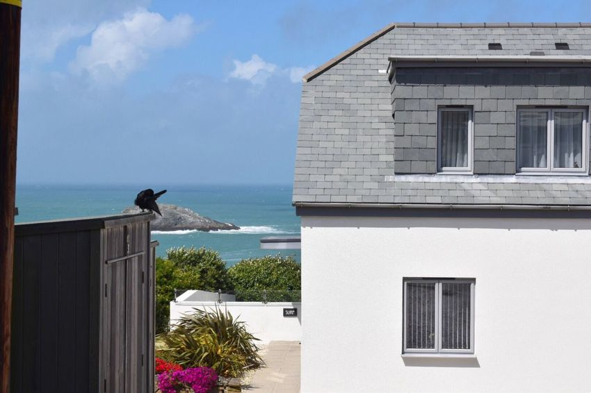 EyeEm Gallery Building Exterior Built Structure Architecture Bird Sea Perching Outdoors Horizon Over Water Bright Day Summer Holiday Accommodation Holiday Destination Cornwall Uk Crantock Love To Take Photos ❤ Advertising Cornwall