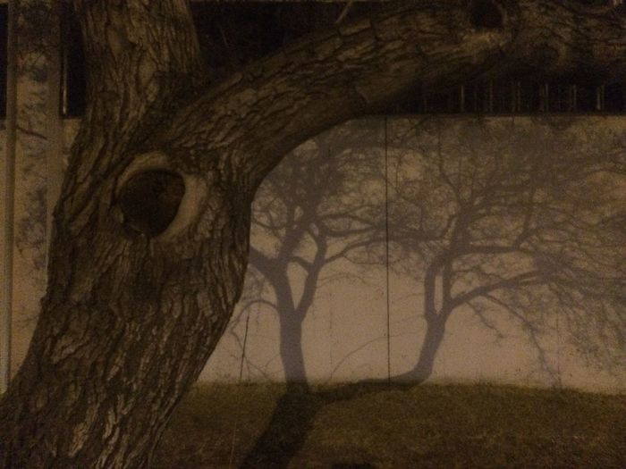 Bare Braches Bare Tree Branch Built Structure Close-up Nature Night No People Part Of Shadow Shadows Streetlight Tree Tree Trunk Wall Wall - Building Feature Winter Wood - Material
