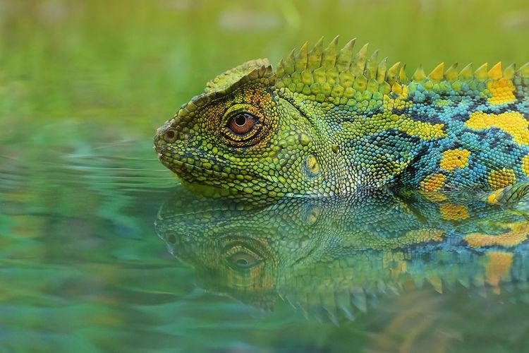 Close-up of lizard in lake