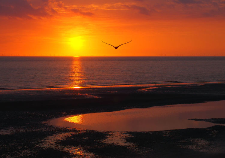 beautiful golden glowing sunset reflecting on a calm sea with orange colorful dramatic clouds and a single seagull flying out to the ocean Coastline Reflected Glory Twilight Beach Beauty In Nature Bird Flying Horizon Over Water Orange Color Outdoors Sea Seagull Silhouette Sky Sun Sunset Tranquil Scene Tranquility Water