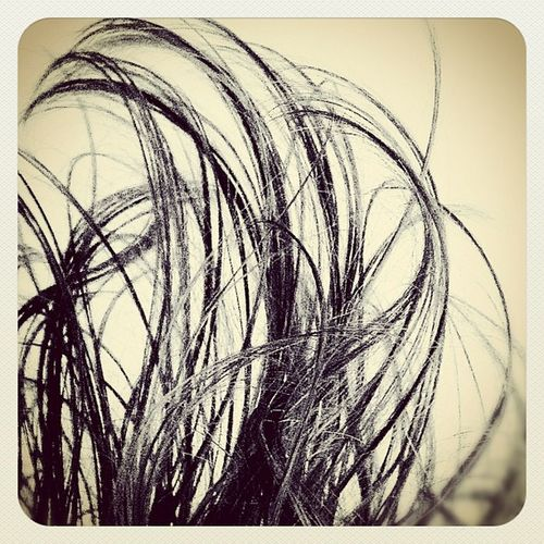 Not branches. Not grass. #dirtybird Ilikemybirddirty Dirtybird_rebels Blackandwhite Bw Eb Instamood Earlybird Instagood Instaaaaah Ighype Earlybirding Earlybirdlove Insta_underdog Ilovedirtybird Insta4eb Dirtybird