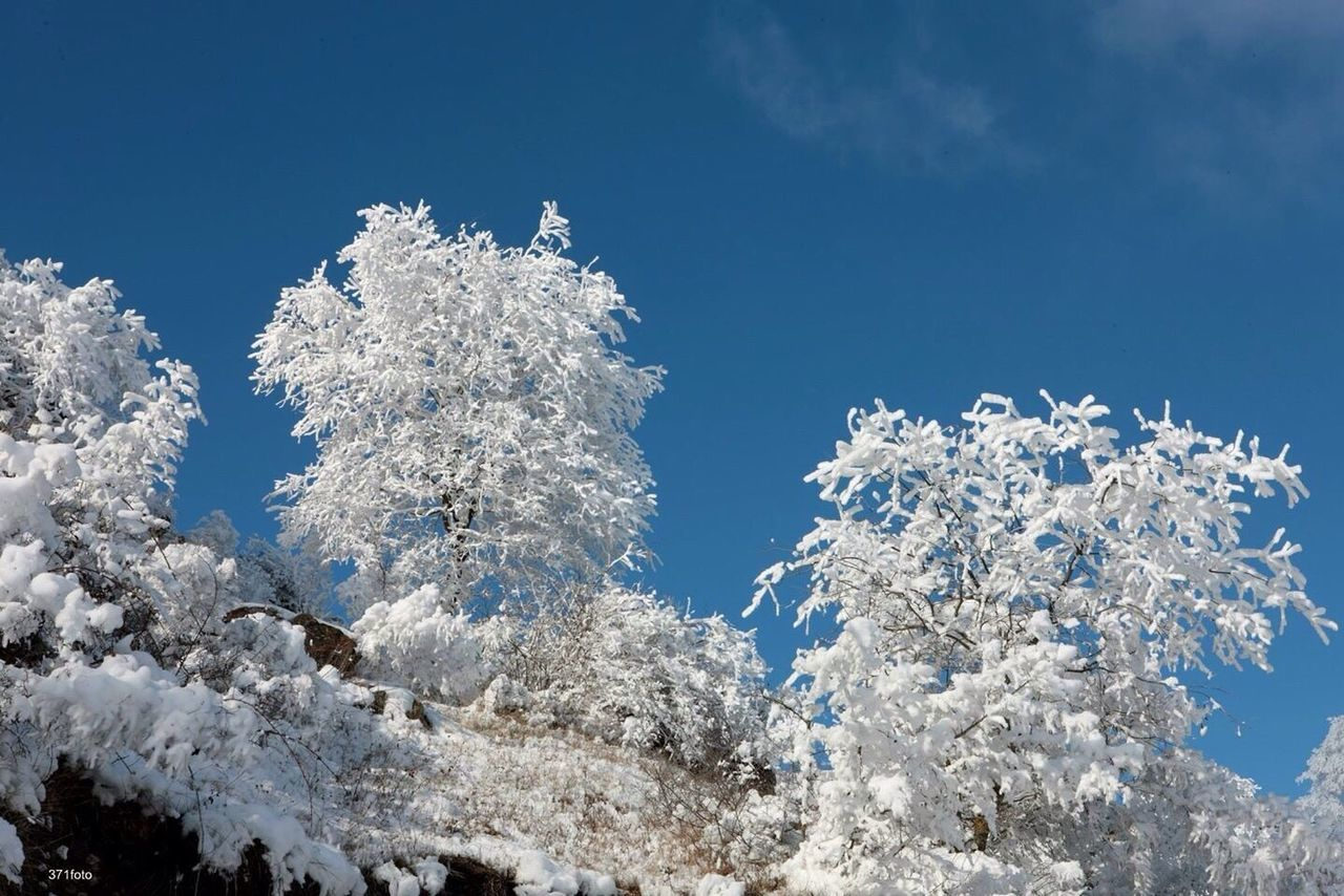 LOW ANGLE VIEW OF FROZEN PLANTS AGAINST SKY