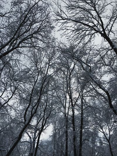 Snow Day Tree Branch Low Angle View Bare Tree Nature No People Outdoors Beauty In Nature Forest Tranquility Sky Day