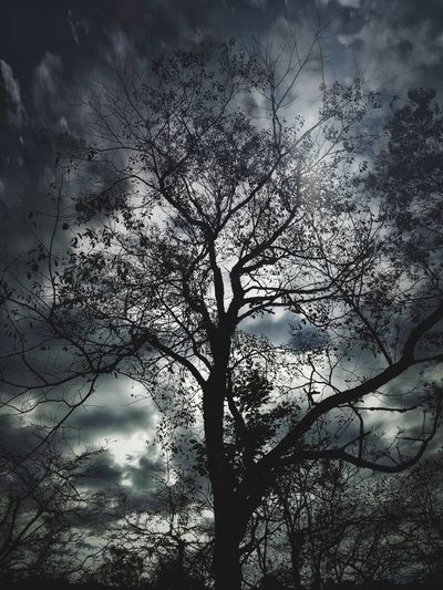 Tree Branch Sky Nature Bare Tree Low Angle View Growth Cloud - Sky No People Silhouette Bird Outdoors Tranquility Beauty In Nature Day Animal Themes Streamzoofamily