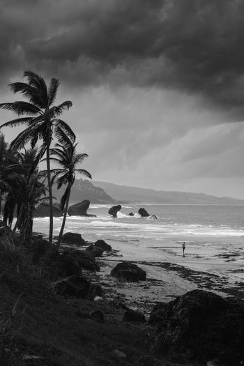 Barbados Beauty In Nature Blackandwhite Holidays Lonely Memories Nature Travel