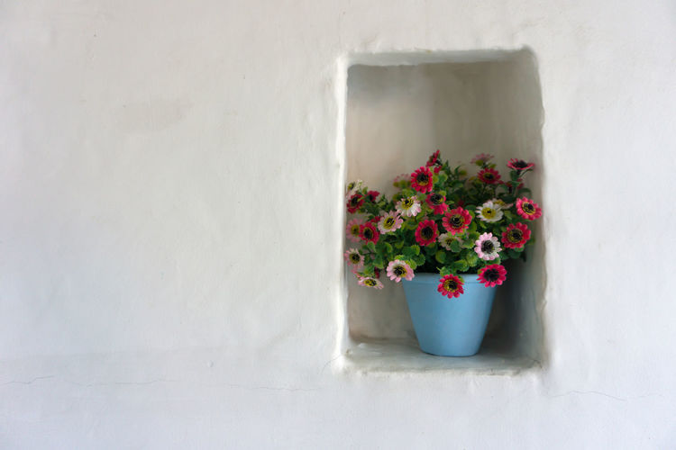 Potted plant on niche against white wall