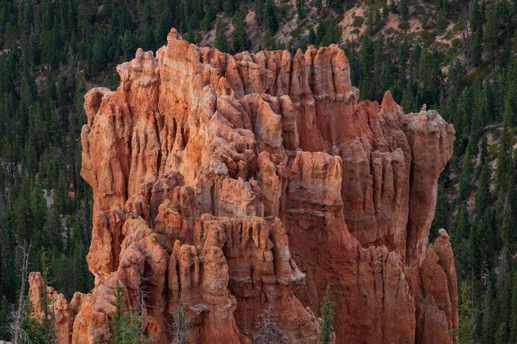 the overwhelming Bryce Canyon Rock Rock - Object Non-urban Scene Nature Beauty In Nature Travel Destinations No People Scenics - Nature Tranquility Tranquil Scene Outdoors Eroded Formation Bryce Canyon Utah National Park Tree Rock Formation Solid Land Travel Plant Physical Geography Geology Sandstone