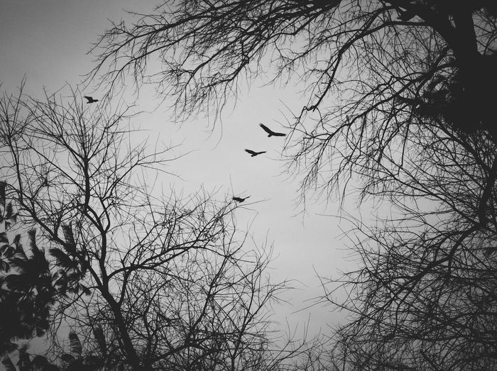 Low angle view of silhouette birds flying against sky