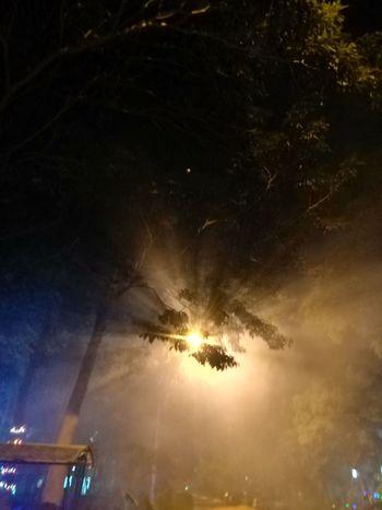 Smoke Arts Culture And Entertainment Night Illuminated Celebration Firework Display Outdoors Firework - Man Made Object No People Tree Light Beam Sky