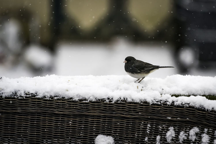 Bird perching on snow covered