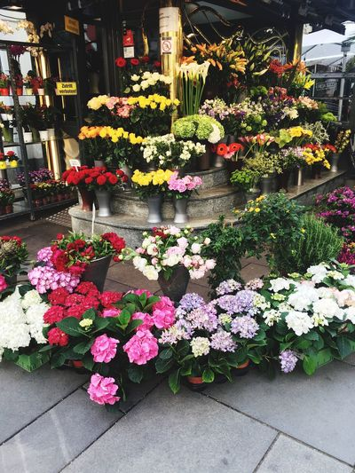 Close-up of flowers in shop