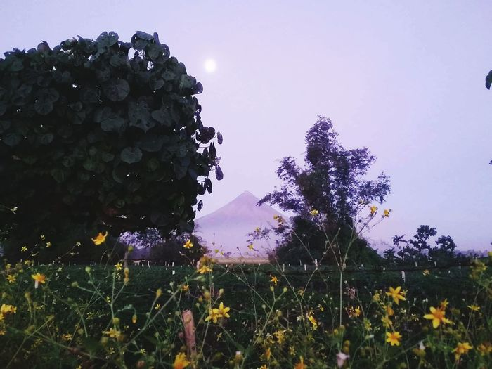The Scent of the Province of Albay. First Eyeem Photo