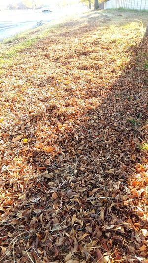 Seasonal Change Fallen Leaves Don't Leaf Me Stop Leafing Don't Leaf Around 😅😂😆 On The Way The Journey Is The Destination