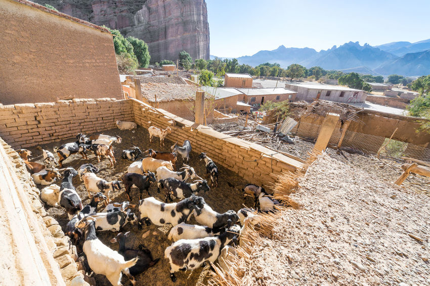 Goats in a pen in the small town of Espicaya near Tupiza, Bolivia Amazing Andes Beauty Bolivia Cactus Canyon Color Countryside Desert Destination Formation Formations Goat High Hills Landscape Mountain Nature Pen Rock Rocks South America Travel TUPIZA Valley