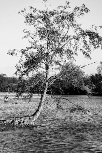 Tree Tree Trunk Tree Over Water Water Plant Waterfront Nature Tranquility Beauty In Nature Scenics - Nature Tranquil Scene Winter Lake Lakeside Lake View Tree In Water Tree In The Water Tree In Winter Black And White Tree Black And White Collection  Black And White Photography Black And White Nature