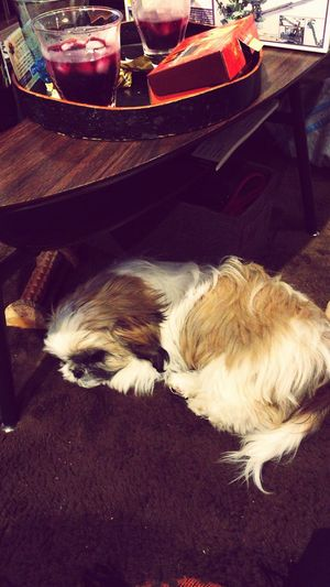 Cozy Place Underthetable Relaxing Sleepydog Shih Tzu Love I Love My Dog