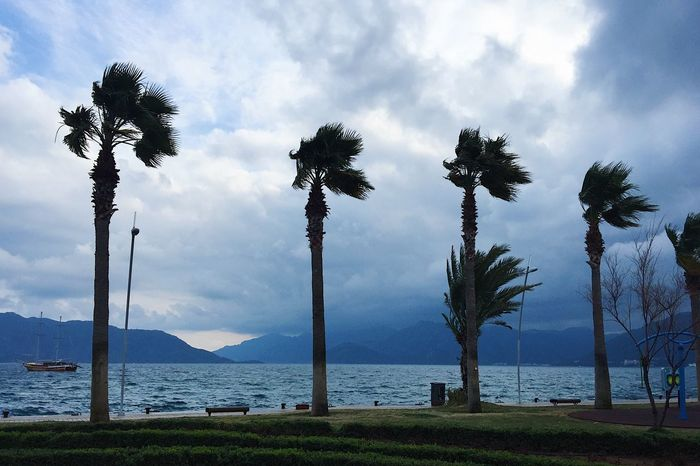 Palms blown by wind on a stormy day in Marmaris, Turkey Beautiful Blog Day Green Holiday Marmaris Mountain Nature Nature Nature_collection No People Palm Palm Tree Sea Sky Spring Storm Tourism Tourist Travel Travel Blog Travel Destinations Tree Turkey Vacation