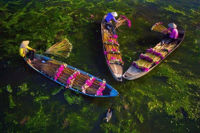 High angle view of people collecting flowers from lake in boat