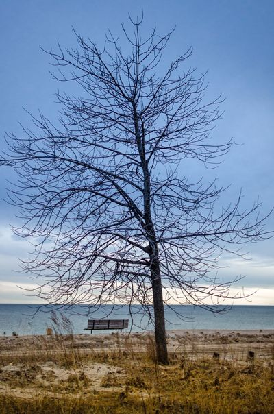 Bare Tree Beauty In Nature Blue Cloud Day Field Grass Growth Horizon Over Land Idyllic Lake Ontario Landscape Nature No People Non-urban Scene Outdoors Picton  Prince Edward County Remote Rural Scene Scenics Sky Tranquil Scene Tranquility Tree