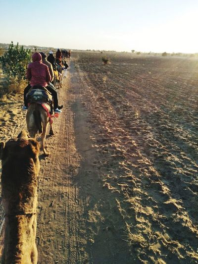 Tour at Rajasthan.. Traveler Point Of View Camel Riding Desert Safari Desert Rajasthan Camel_safari Dog Rear View Sea Sky Riding