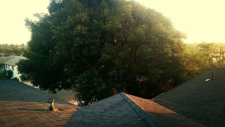 My Point of View.... Also because I locked my self out.... Rooftop View  Autumn Colors
