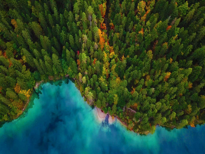 Forest Explosion Tree Plant Beauty In Nature Scenics - Nature Tranquility Water Green Color Growth Tranquil Scene Nature Land Day Idyllic Lake High Angle View Non-urban Scene Reflection No People Forest Outdoors Change Turquoise Colored Aerial Aerial Photography Drone  EyeEmNewHere