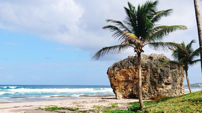 Sea Beach Horizon Over Water Water Nature Tree Outdoors Day Sky Beauty In Nature No People Sand Scenics Wave Palm Tree