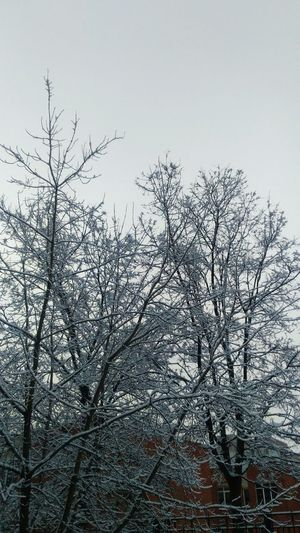 Spring #sity #stpetersburg #santpetersburg #StPetersburg #snow Bird Tree Winter Branch Sky