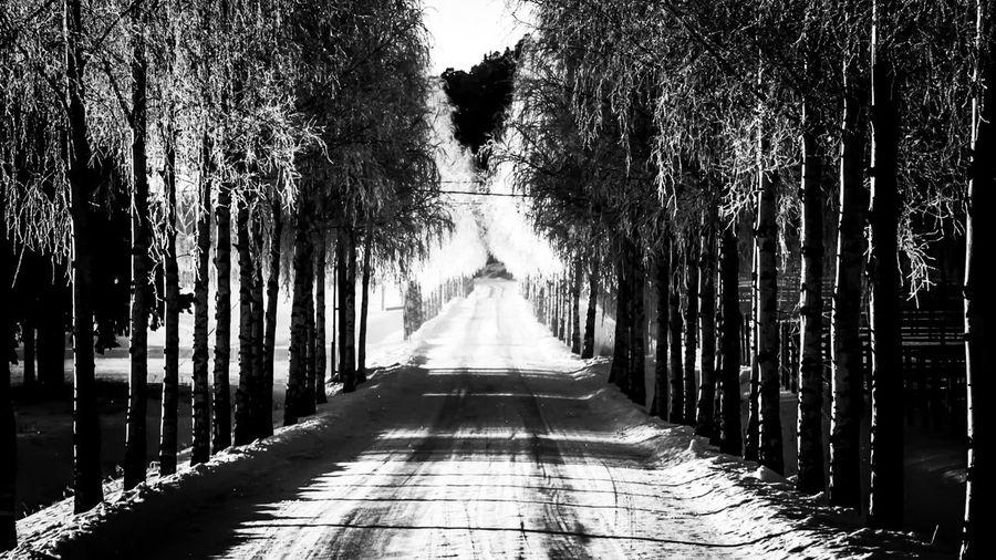 Empty narrow pathway along trees