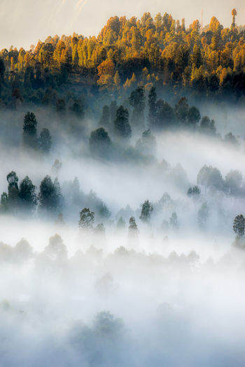 Trees amidst fog during sunset