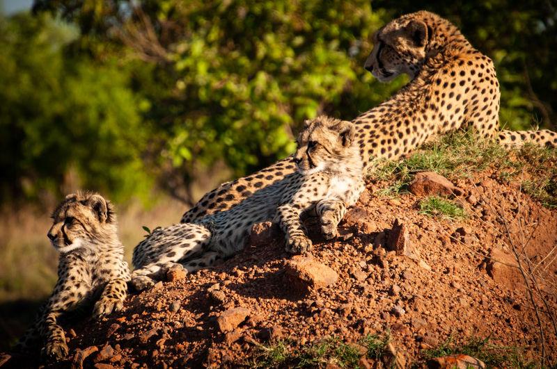 Portrait of a cat on land