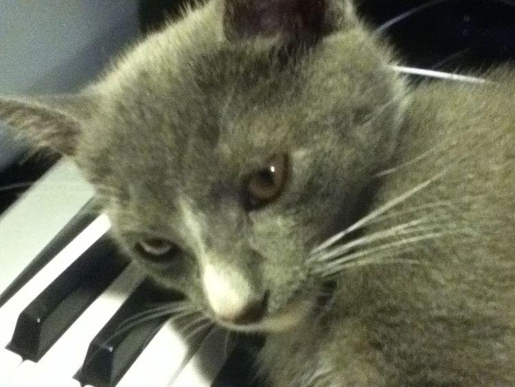 Cosmo Pusscat Cats Cat♡