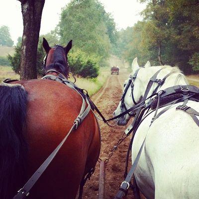 Durch die Lüneburger Heide - diesmal mit Pferd, statt Rad Naturschutzgebiet Natur Lüneburgerheide Kutsche Draußen