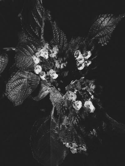 Flower Blankandwhite Nature