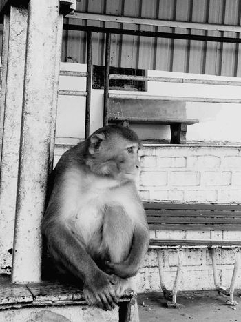sad monkey Monkey Sad Monkey Waiting Monkey One Animal Animal Themes Mammal Day Pets Domestic Cat Domestic Animals
