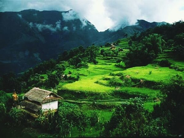 Mountain Agriculture Landscape Hut Field Valley Rice Paddy Farm Rice - Cereal Plant Nature Outdoors Rice - Food Staple Asian Style Conical Hat Fog Social Issues Travel Terraced Field Plant No People Tree